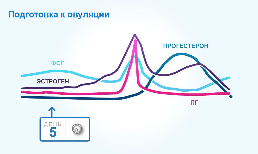 spermiernes levetid i kvindelig krop